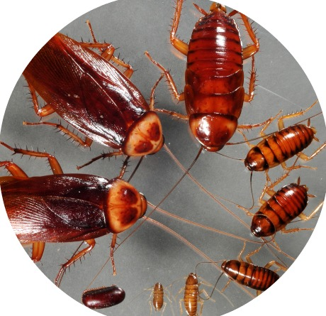 Conditions that Create Roaches